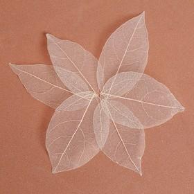 Сухие листья, (набор 5 шт), размер 1 шт:: 8×5 см, цвет белый