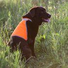 Сигнальный жилет для собак OSSO, 40 (ДС 21 см), микс цветов