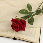 цветы искусственные роза 56 см d-8,5 см красная - фото 4455960