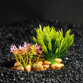 Aquarium artificial plant on a stone stand, 14 x 11 x 7 cm