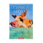 """Календарь перекидной, пружина """"Символ года - 1"""" 2019 год, 17х25см"""