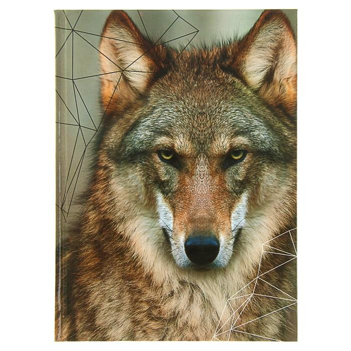 """Колледж-тетрадь А5, 80 листов клетка Calligrata """"Волк"""", твёрдая обложка"""
