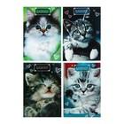 Блокнот А6, 24 листа на скрепке Calligrata «Котята», картон хром-эрзац