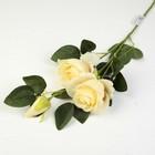 """Цветы искусственные """"Розы с бутоном"""" 7*60 см, кремовый"""