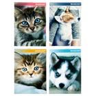Блокнот А6, 40 листов на скрепке Calligrata «Котята и щенята», картон хром-эрзац