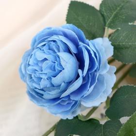"""Цветы искусственные """"Роза терция"""" 8*60 см, голубой - фото 1692599"""