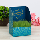 """Greeting card with growing grass """"Thank you"""""""