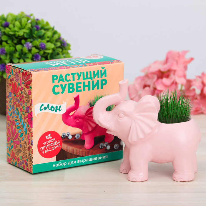 Растущая трава в горшочке «Слон»