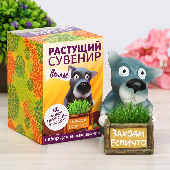 """Растущая трава в горшочке """"Волк"""""""