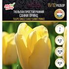 Тюльпан простой ранний Санни Принц, р-р 11/12, 7 шт