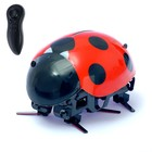 """Insect """"ladybug"""", remote control, speed 1,6 m/s"""