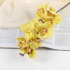 """Цветы искусственные """"Орхидея фаленопсис бархатистая"""" 10*90 см, жёлтый - фото 1692347"""