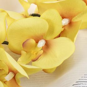 """Цветы искусственные """"Орхидея фаленопсис бархатистая"""" 10*90 см, жёлтый - фото 1692348"""