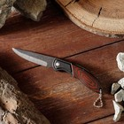 Folding knife, handle metal, color of wood, 8cm, without locking, 15*3cm
