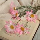 """Цветы искусственные """"Дороникум ромашка"""" 6*50 см, розовый"""