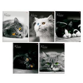 Тетрадь А5+, 80 листов в клетку на гребне «Кошки», обложка мелованный картон, глянцевая ламинация, МИКС