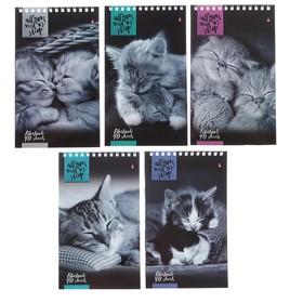 """Блокнот А5, 40 листов на гребне """"Кошки"""", 5 видов МИКС"""