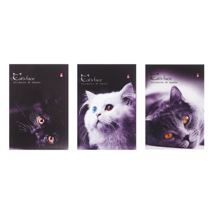 """Блокнот А6, 40 листов на скрепке """"Котята"""" 3 вида МИКС"""