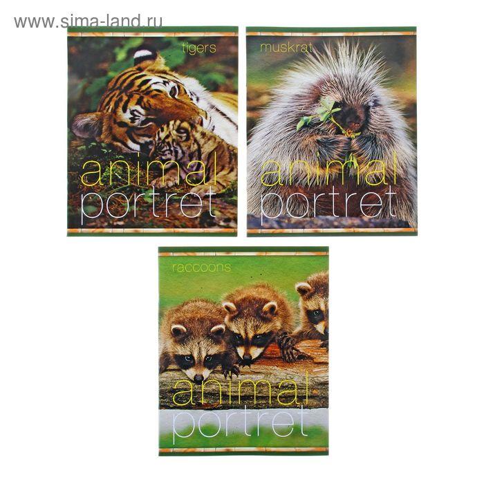 Тетрадь 18 листов клетка Animal portret, картонная обложка, МИКС