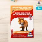 """Обучающие карточки по методике Г. Домана """"Дикие животные на английском языке"""""""