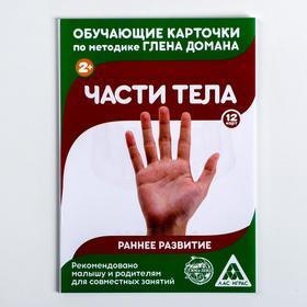 "Flashcards on methodology of G. Doman ""body Parts"""