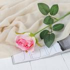 """Цветы искусственные """"Роза Аква"""" 5*40 см, розовый - фото 1692495"""