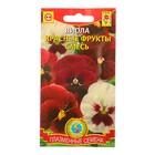 """Семена цветов Виола """"Красные фрукты"""" смесь, Дв, 0,05 г"""