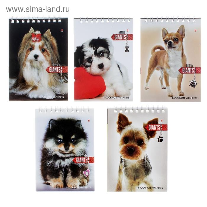 Блокнот А6, 40 листов на гребне «Собаки», 5 видов МИКС