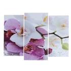 """Модульная картина """"Краповая орхидея""""  (2-25х52; 1-30х60) 60х80 см"""