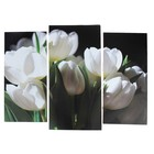 """Модульная картина """"Белые тюльпаны""""  (2-25х52; 1-30х60) 60х80 см"""