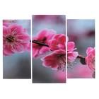"""Модульная картина """"Цветы сакуры""""  (2-25х52; 1-30х60) 60х80 см"""