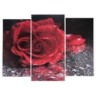 "Модульная картина ""Роза под дождём""  (2-25х52; 1-30х60) 60х80 см"