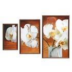 """Картина модульная """"Орхидеи""""  (16х30,23х40,31х50)  50х70 см"""