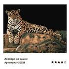 Картина по номерам «Леопард на камне» 40х50 см