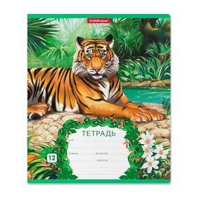 Тетрадь 12 листoв в клетку «Джунгли», обложка мелованный картон