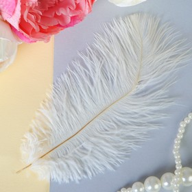 Feather for decoration, size 24 cm, color white