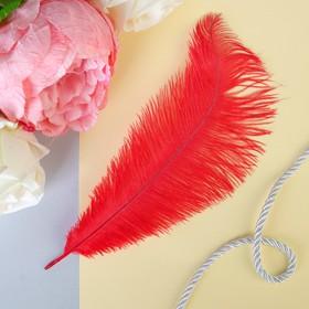 Перо для декора, размер 24 см, цвет красный