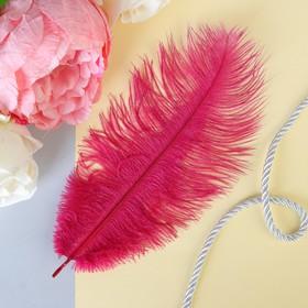 Перо для декора, размер 24 см, цвет бордовый