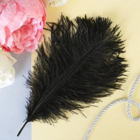 Перо для декора, размер 20,5×7,5 см, цвет чёрный