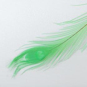 Перо павлина для декора, цвет зеленый