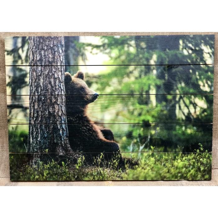 """Картина для бани """"Медведь в лесу"""", МАССИВ, 60×40 см"""