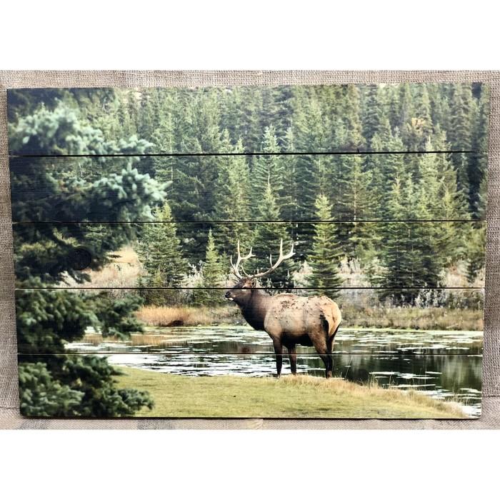 """Картина для бани """"Лось у лесной реки"""", МАССИВ, 60×40 см"""