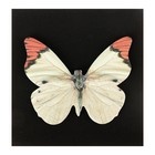 Блок с липким краем, «Бабочки», 30 листов, МИКС