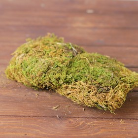 Decor Moss, 60 g WS-081