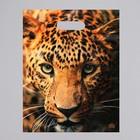 """Пакет """"Взгляд леопарда"""", полиэтиленовый с вырубной ручкой, 31 х 40 см, 60 мкм"""