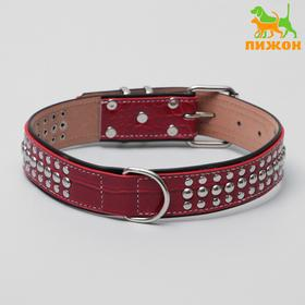 The collar is double layered, riveted, 65 x 3.5 cm, Burgundy