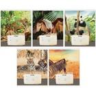 Тетрадь 12 листов косая линейка ArtSpace. Wild animals «Природа», МИКС