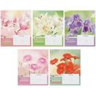 Тетрадь 18 листов линейка ArtSpace «Цветы». Blooming moments
