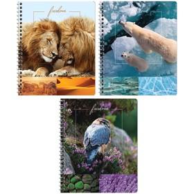 """Тетрадь 48 листов в клетку на гребне «Природа. Freedom"""", обложка мелованный картон, ВД-лак, блок офсет, МИКС"""