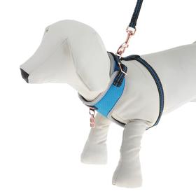 Комплект амуниции Dogness для кошек и собак до 5 кг, с адресником, нейлон, микс
